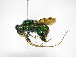 ( - INB0004241851)  @11 [ ] Copyright (2012) Braulio Hernandez Instituto Nacional de Biodiversidad