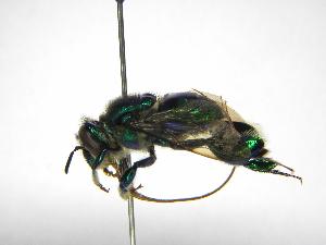 ( - INB0004242187)  @11 [ ] Copyright (2012) Braulio Hernandez Instituto Nacional de Biodiversidad