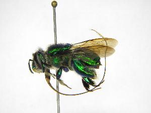 ( - INB0004242478)  @11 [ ] Copyright (2012) Braulio Hernandez Instituto Nacional de Biodiversidad