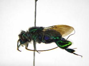 ( - INB0004262188)  @11 [ ] Copyright (2012) Braulio Hernandez Instituto Nacional de Biodiversidad