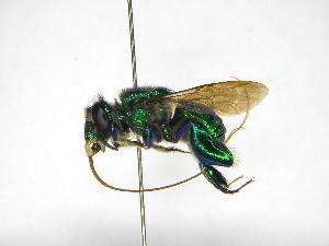 ( - INB0004273713)  @11 [ ] Copyright (2012) Braulio Hernandez Instituto Nacional de Biodiversidad