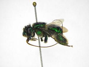 ( - INB0004290593)  @11 [ ] Copyright (2012) Braulio Hernandez Instituto Nacional de Biodiversidad