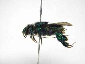 ( - INB0004301161)  @11 [ ] Copyright (2012) Braulio Hernandez Instituto Nacional de Biodiversidad