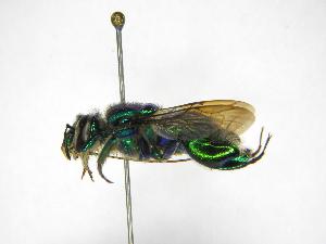 ( - INB0004301189)  @11 [ ] Copyright (2012) Braulio Hernandez Instituto Nacional de Biodiversidad