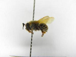 ( - INBIOCRI000546158)  @11 [ ] Copyright (2012) Braulio Hernandez Instituto Nacional de Biodiversidad