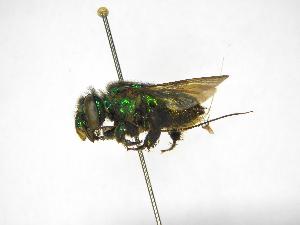 ( - INBIOCRI001292228)  @11 [ ] Copyright (2012) Braulio Hernandez Instituto Nacional de Biodiversidad