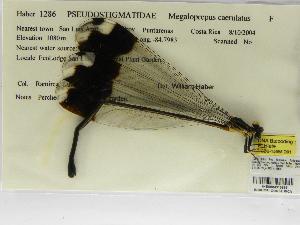 ( - INB0004315893)  @11 [ ] Copyright (2012) B. Haber Instituto Nacional de Biodiversidad