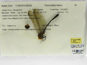 (Neocordulia - INB0004315982)  @11 [ ] Copyright (2012) B. Haber Instituto Nacional de Biodiversidad