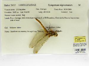 (Sympetrum nigrocreatum - INB0004316004)  @11 [ ] Copyright (2012) B. Haber Instituto Nacional de Biodiversidad