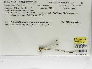 (Perilestidae - INB0004316258)  @12 [ ] Copyright (2012) B. Haber Instituto Nacional de Biodiversidad