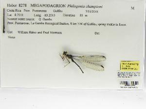 (Philosinidae - INB0004318941)  @13 [ ] Copyright (2012) B. Haber Instituto Nacional de Biodiversidad
