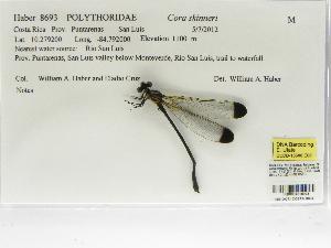 (Polythoridae - INB0004318945)  @13 [ ] Copyright (2012) B. Haber Instituto Nacional de Biodiversidad