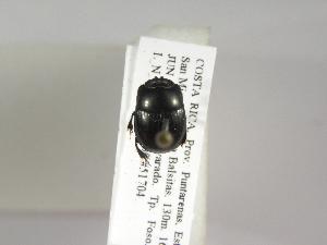 (Ateuchus rodriguezi - INB0003052923)  @11 [ ] Copyright (2010) A. Solis Instituto Nacional de Biodiversidad