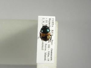 (Canthon mutabilis - INB0003490886)  @12 [ ] Copyright (2010) A. Solis Instituto Nacional de Biodiversidad
