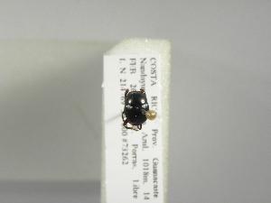 (Canthon caelius - INB0003702505)  @12 [ ] Copyright (2010) A. Sol's Instituto Nacional de Biodiversidad