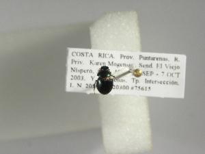 (Canthon morsei - INB0003782249)  @11 [ ] Copyright (2010) A. Solis Instituto Nacional de Biodiversidad