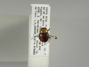 (Canthon moniliatus - INB0003932287)  @15 [ ] Copyright (2010) A. Solis Instituto Nacional de Biodiversidad