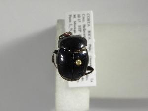 (Canthon aequinoctialis - INB0004102971)  @13 [ ] Copyright (2010) A. Solis Instituto Nacional de Biodiversidad