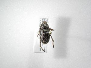 (Ceraspis - INB0004204231)  @14 [ ] Copyright (2010) A. Solis Instituto Nacional de Biodiversidad