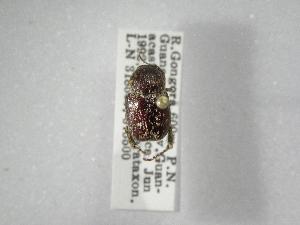 (Barybas - INBIOCRI000710962)  @13 [ ] Copyright (2010) A. Solis Instituto Nacional de Biodiversidad