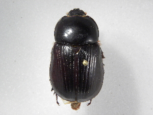( - INBIOCRI001033928)  @13 [ ] Copyright (2010) A. Sol's Instituto Nacional de Biodiversidad
