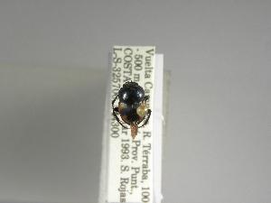 (Canthon lituratus - INBIOCRI001319026)  @11 [ ] Copyright (2010) A. Solis Instituto Nacional de Biodiversidad
