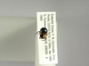 (Canthon mutabilis - INBIOCRI001696546)  @12 [ ] Copyright (2010) A. Solis Instituto Nacional de Biodiversidad