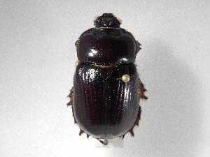 ( - INBIOCRI001732286)  @13 [ ] Copyright (2010) A. Sol's Instituto Nacional de Biodiversidad