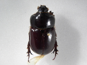 ( - INBIOCRI001860017)  @13 [ ] Copyright (2010) A. Sol's Instituto Nacional de Biodiversidad