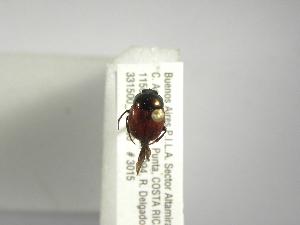 (Canthon hartmanni - INBIOCRI001920321)  @12 [ ] Copyright (2010) A. Solis Instituto Nacional de Biodiversidad
