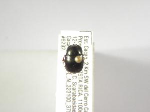 (Ateuchus earthorum - INBIOCRI002328542)  @11 [ ] Copyright (2010) A. Solis Instituto Nacional de Biodiversidad