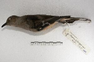 ( - MACN-Or-ct 1289)  @12 [ ] Copyright (2014) MACN Museo Argentino de Ciencias Naturales, Bernardino Rivadavia