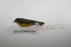 "( - MACN-Or-ct 3220)  @13 [ ] Copyright (2012) MACN Museo Argentino de Ciencias Naturales ""Bernardino Rivadavia"""