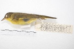 ( - MACN-Or-ct 4244)  @13 [ ] Copyright (2015) MACN Museo Argentino de Ciencias Naturales, Bernardino Rivadavia
