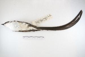 ( - MACN-Or-ct 5122)  @13 [ ] Copyright (2014) MACN Museo Argentino de Ciencias Naturales, Bernardino Rivadavia