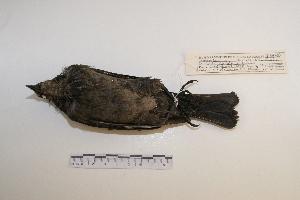 ( - MACN-Or-ct 7028)  @13 [ ] Copyright (2013) MACN Museo Argentino de Ciencias Naturales, Bernardino Rivadavia