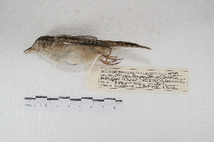 ( - MACN-Or-ct 7779)  @11 [ ] Copyright (2015) MACN Museo Argentino de Ciencias Naturales, Bernardino Rivadavia