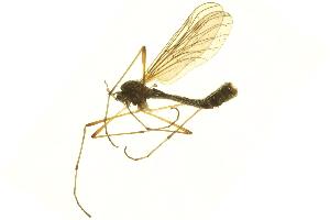 (Hesperinidae - 10BBTIP-0221)  @13 [ ] CreativeCommons - Attribution Non-Commercial Share-Alike (2011) BIO Photography Group Biodiversity Institute of Ontario