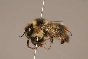 (Bombus defector - 206-CHN)  @11 [ ] Unspecified (default): All Rights Reserved  Unspecified Unspecified