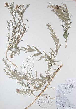 ( - BABY-02173)  @11 [ ] by (2017) Unspecified B.A. Bennett Yukon herbarium (BABY)