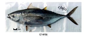 (Thunnus obesus - C1902)  @14 [ ] Unspecified (default): All Rights Reserved  Unspecified Unspecified