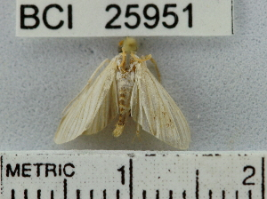 (Noctuidae sp. 5YB - YB-BCI25951)  @13 [ ] No Rights Reserved  Unspecified Unspecified