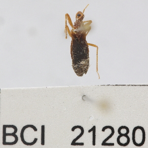 (Reduviidae sp.13YB - YB-BCI21280)  @11 [ ] No Rights Reserved  Unspecified Unspecified