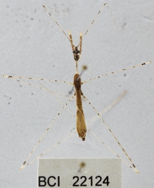 (Reduviidae sp.16YB - YB-BCI22124)  @11 [ ] No Rights Reserved  Unspecified Unspecified
