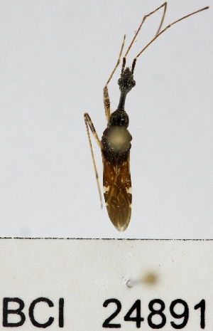 (Reduviidae sp.24YB - YB-BCI24891)  @11 [ ] No Rights Reserved  Unspecified Unspecified