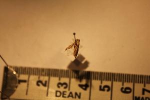( - P190)  @12 [ ] CreativeCommons - Attribution (2011) Elizabeth Clare Biodiversity Institute of Ontario