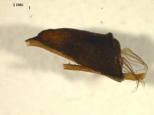 (Simulium ornatum s.l - BIOUG01782-H09)  @12 [ ] CreativeCommons - Attribution Non-Commercial Share-Alike (2012) CBG Photography Group Centre for Biodiversity Genomics