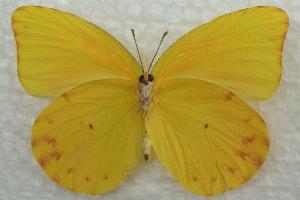 (Prestonia - BIOUG08726-E12)  @14 [ ] CreativeCommons - Attribution Non-Commercial Share-Alike (2013) CBG Photography Group Centre for Biodiversity Genomics