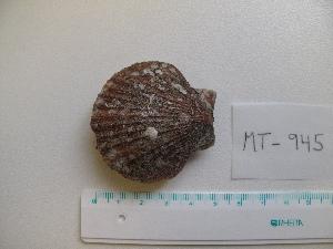 ( - MT00945)  @11 [ ] by-nc-sa (2015) Unspecified Deutsche Zentrum fuer Marine Biodiversitaetsforschung Wilhelmshaven