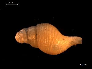 ( - MT07704)  @11 [ ] by-nc-sa (2015) Unspecified Deutsche Zentrum fuer Marine Biodiversitaetsforschung Wilhelmshaven